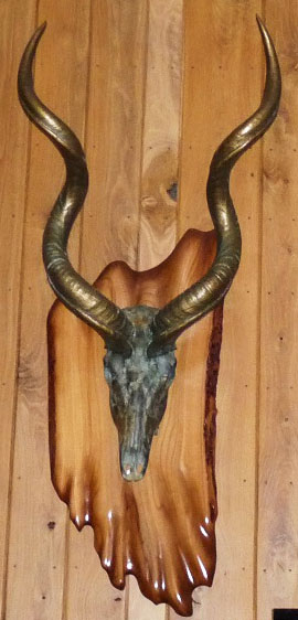 "What's that mounted on the plaque Jerry made? ""That's a kudu. Its one of the critters I harvested when my wife and I went to South Africa back in 2004. The brass on the horns and the bronze on the skull ​is referred to as a cold metal coating. The color is derived solely by the use of ground metal suspended in a acrylic solution. Since it is actual metal - when you apply various acids you get the same patina as the metal would acquire on its own over time."""